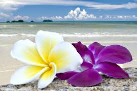 Orchids On The Beach