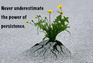 persistence  flower(1)
